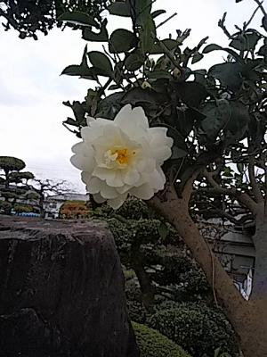 Photo_20191120095101