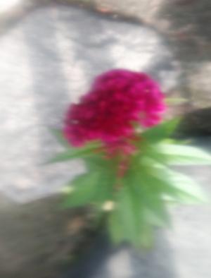 Photo_20200909082601